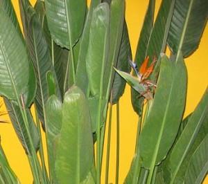 zimmerpflanze 300x266
